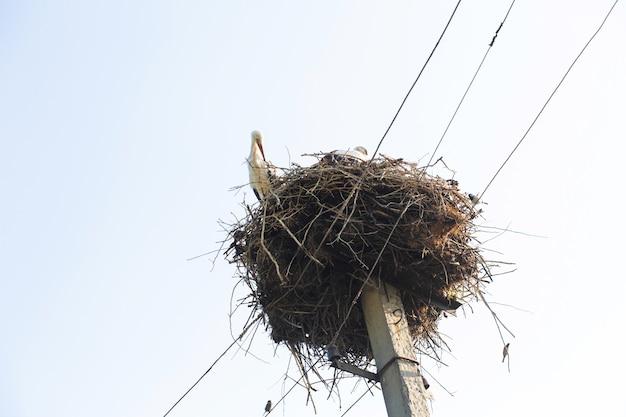 Um ninho com cegonhas em um poste de uma linha de energia em uma vila