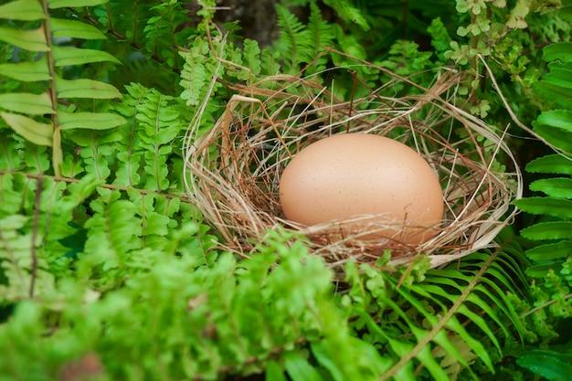 Um ninho com um ovo em plantas verdes na floresta