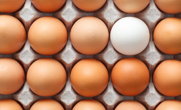 Um ovo branco cercado por ovos marrons.