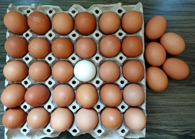 Um ovo de pato entre muitos ovos de galinha frescos conceito de sucesso empresarial diferente, mas harmonioso