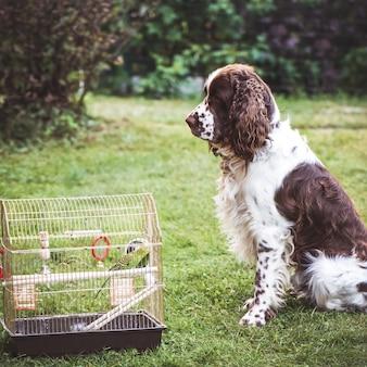 Um papagaio em uma gaiola ao ar livre, um cão de caça senta ao lado dele