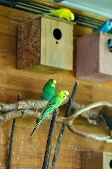 Um papagaio listrado verde sentado em um galho