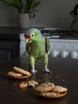 Um papagaio verde grande senta-se em uma mesa com biscoitos de shortbread