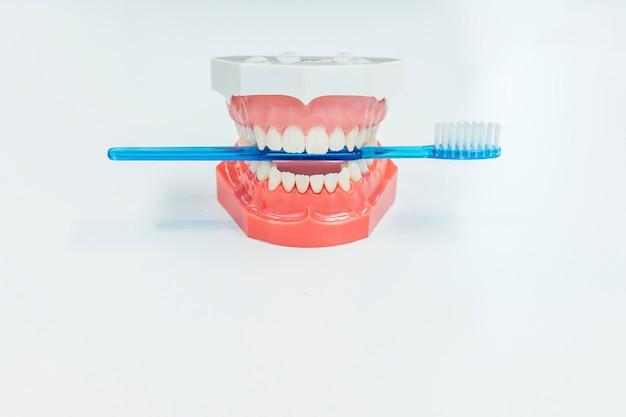 Um par de dentes falsos, segurando uma escova de dentes em uma mesa