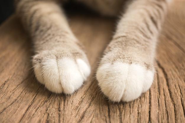 Um par de pernas de gato bonito