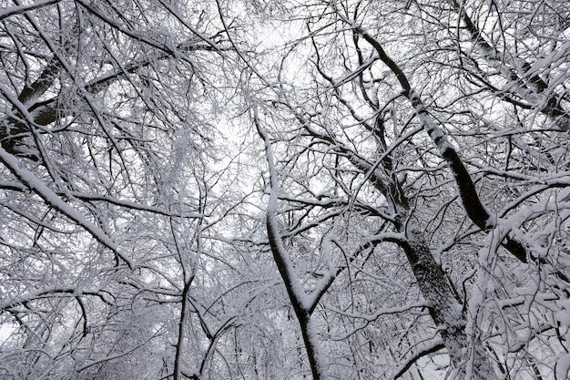 Um parque com diferentes árvores no inverno