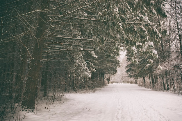 Um parque de inverno com árvores cobertas de neve