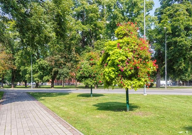 Um parque florestal com grandes árvores