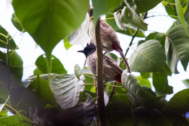 Um pássaro em seu habitat natural durante um dia agradável