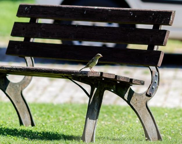 Um pássaro em um banco foto de alta qualidade