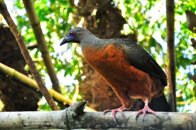 Um pássaro em um galho