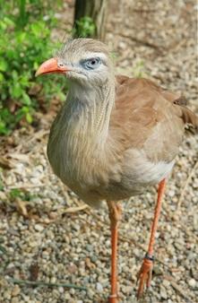 Um pássaro no safari do jardim zoológico