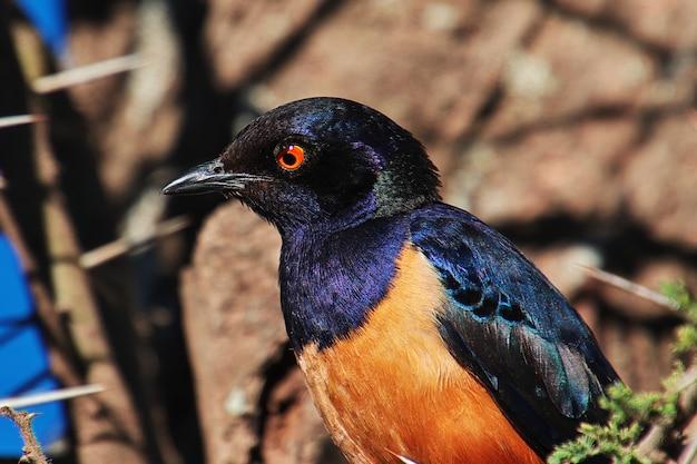 Um pássaro no safari no quênia e na tanzânia, áfrica