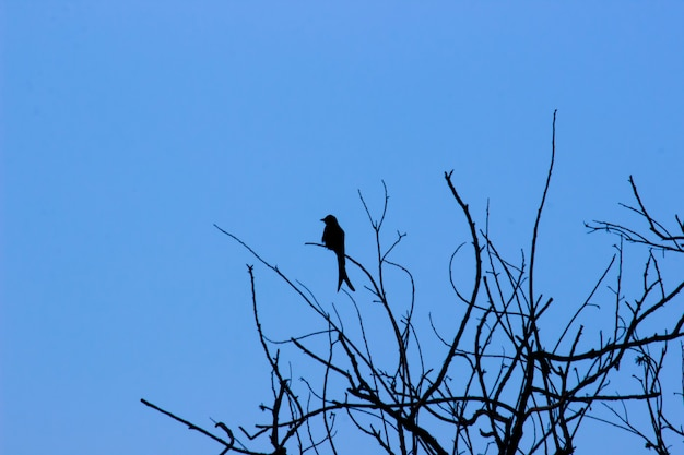 Um pássaro no topo da árvore contra o céu azul ao fundo