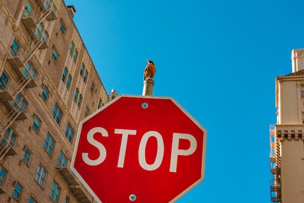 Um pássaro sentado em um trânsito stop sinaliza um conceito de bem-estar animal