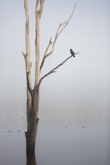 Um pássaro sentado em uma árvore no lago moogerah em uma manhã de nevoeiro, queensland, austrália