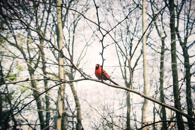 Um pássaro vermelho na floresta