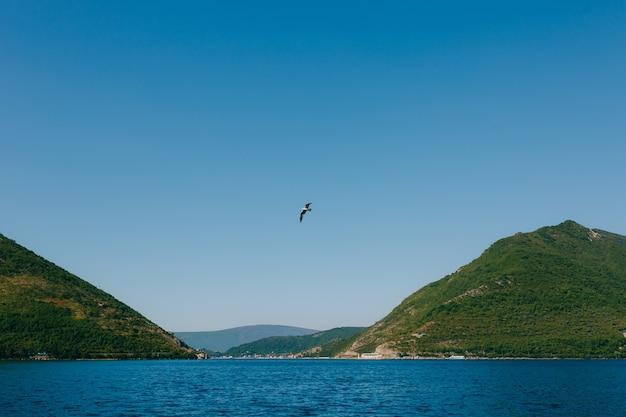 Um pássaro voando em um céu azul claro acima do mar