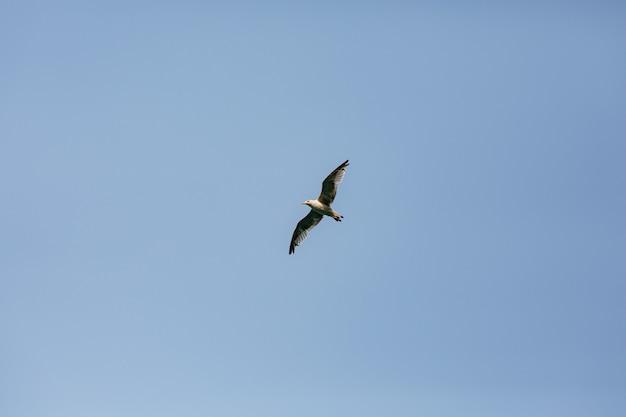 Um pássaro voando em um céu azul claro