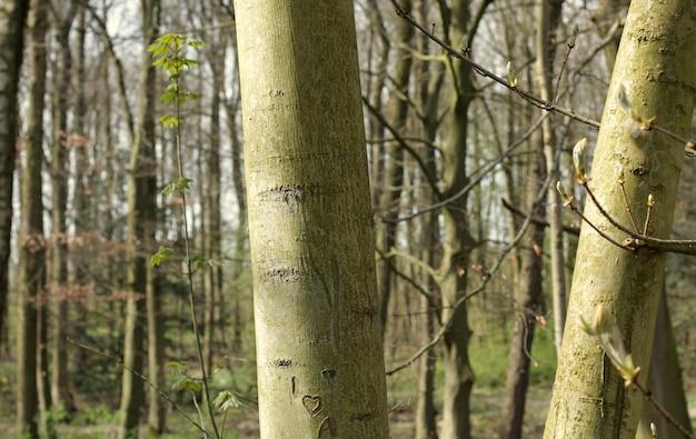 Um passeio na floresta de amsterdã