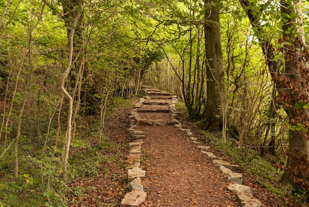 Um passeio na floresta - vale wye