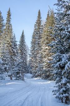 Um passeio pela floresta de inverno. árvores com neve e uma trilha de esqui cross-country. estradas bonitas e incomuns e trilhas na floresta. bela paisagem de inverno.