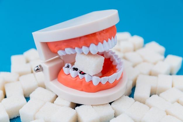 Um pedaço de açúcar na mandíbula falsa com muitos buracos nos dentes isolados.