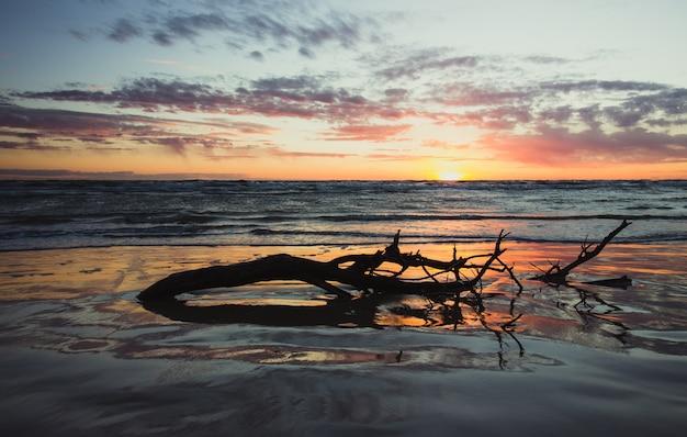 Um pedaço de árvore com galhos que se afogaram na água do oceano durante o pôr do sol