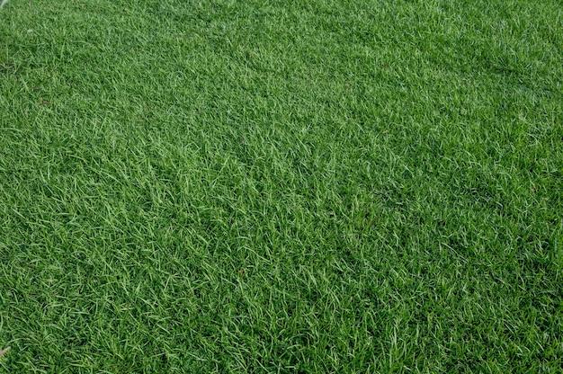 Um pedaço de grama verde, na quadra