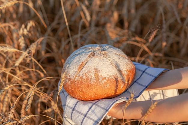 Um pedaço de pão recém-assado em um campo de trigo ou centeio. uma mulher segura um pão de centeio, pão fresco no contexto de espigas de trigo. pão de centeio integral em um guardanapo xadrez