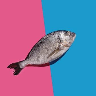 Um peixe dourado em uma superfície azul e rosa brilhante