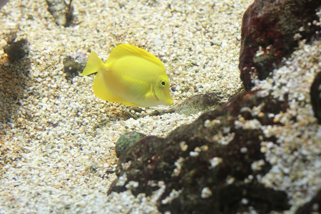 Um peixe no aquário