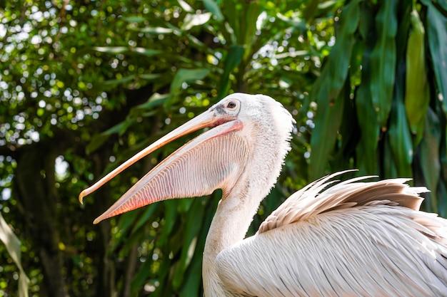 Um pelicano branco em um parque senta-se no close-up da cerca. observação de pássaros
