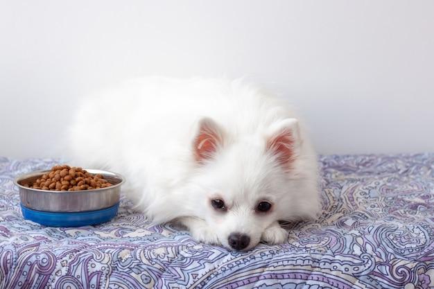 Um pequeno cão branco da pomerânia encontra-se no tapete ao lado de uma tigela de comida.