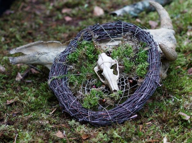 Um pequeno crânio de um animal em uma coroa de ramos e musgo.
