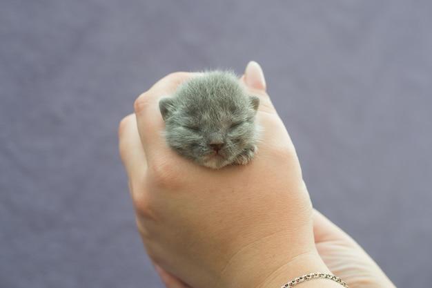 Um pequeno gatinho cego em mãos humanas.
