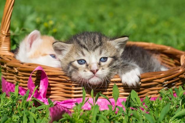 Um pequeno gatinho cinzento