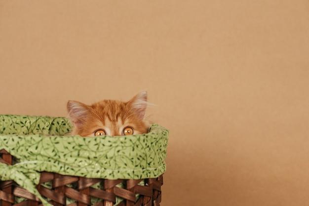 Um pequeno gatinho de gengibre fofo espreita para fora de uma cesta de vime. o gatinho está escondido.