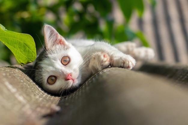Um pequeno gatinho deitado no telhado da casa em tempo de sol