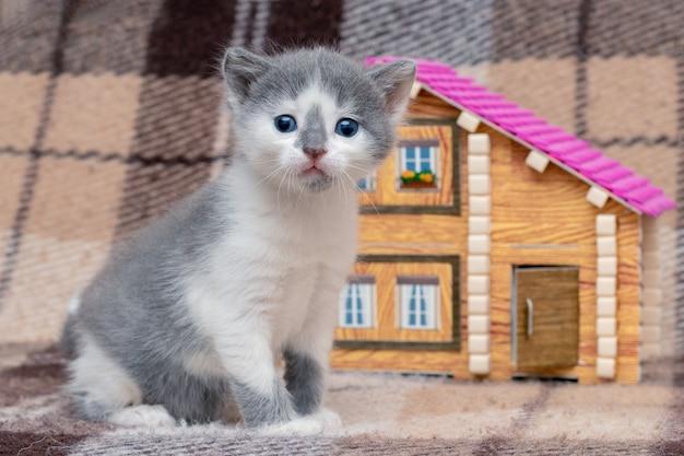 Um pequeno gatinho está brincando perto de uma casa de brinquedo