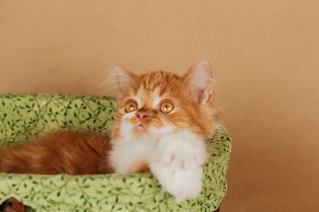Um pequeno gatinho fofo de gengibre encontra-se em uma cesta de vime sobre um fundo marrom claro.