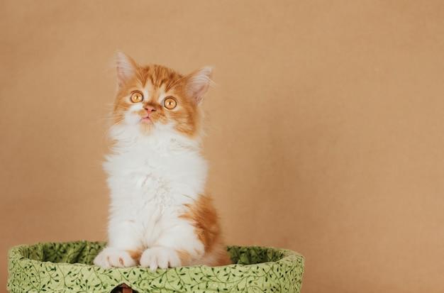 Um pequeno gatinho fofo de gengibre está de pé em uma cesta verde sobre fundo marrom claro. gatinho engraçado