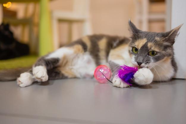 Um pequeno gatinho listrado brinca com bolas de plástico. animais interessantes.