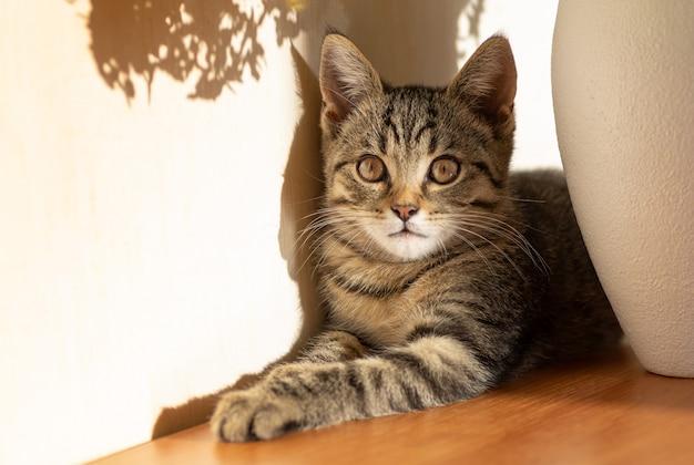 Um pequeno gatinho listrado encontra-se na sombra de um vaso com um buquê.
