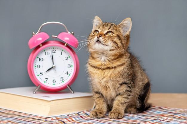 Um pequeno gatinho listrado está sentado perto de um livro e de um despertador e olha para cima