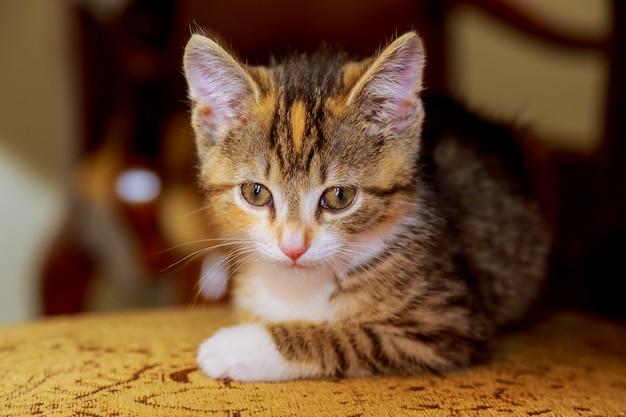 Um pequeno gatinho sentado em uma cadeira de madeira