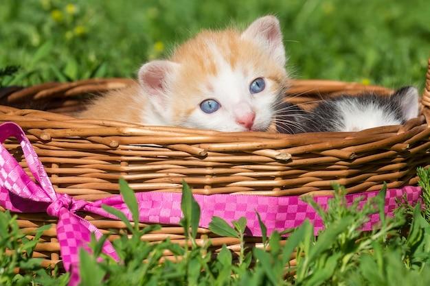 Um pequeno gatinho vermelho
