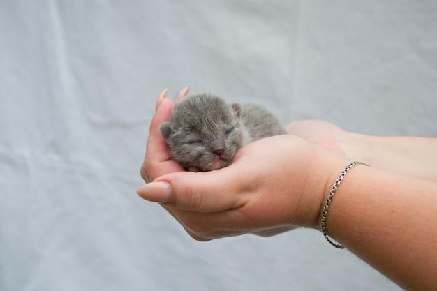 Um pequeno gato cego em mãos carinhosas.