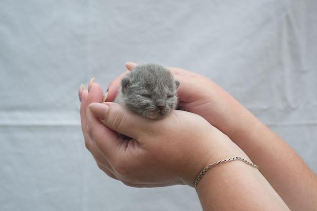 Um pequeno gato cego nas mãos carinhosas