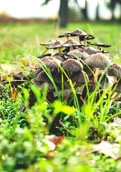 Um pequeno grupo de pequenos cogumelos crescendo no chão.